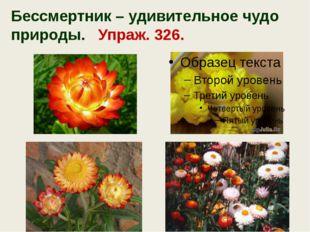 Бессмертник – удивительное чудо природы. Упраж. 326.