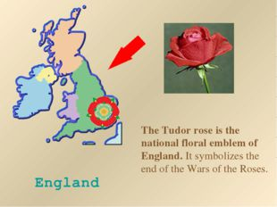 England The Tudor rose is the national floral emblem of England. It symbolize