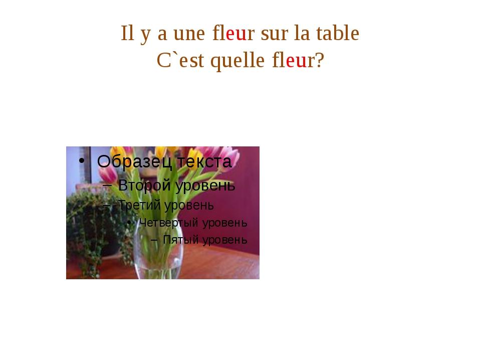 Il y a une fleur sur la table C`est quelle fleur?