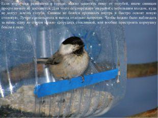 Если кормушка размещена в городе, важно защитить пищу от голубей, иначе синиц