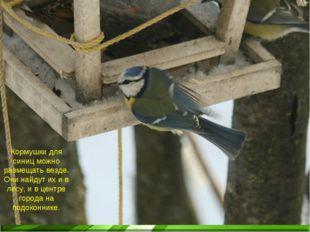 Кормушки для синиц можно размещать везде. Они найдут их и в лесу, и в центре
