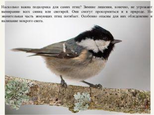 Насколько важна подкормка для самих птиц? Зимние лишения, конечно, не угрожаю
