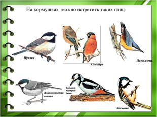 На кормушках можно встретить таких птиц: Поползень Снегирь