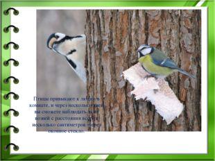 Птицы привыкают к людям в комнате, и через несколько дней вы сможете наблюдат