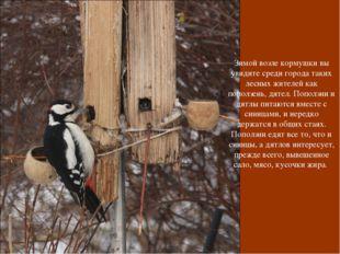 Зимой возле кормушки вы увидите среди города таких лесных жителей как поползе