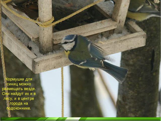 Кормушки для синиц можно размещать везде. Они найдут их и в лесу, и в центре...