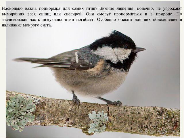 Насколько важна подкормка для самих птиц? Зимние лишения, конечно, не угрожаю...