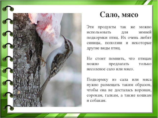 Сало, мясо Эти продукты так же можно использовать для зимней подкормки птиц....