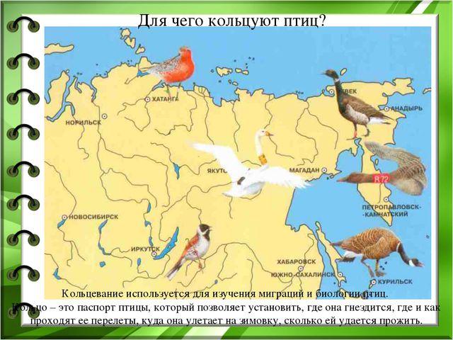 Для чего кольцуют птиц? Кольцевание используется для изучения миграций и биол...