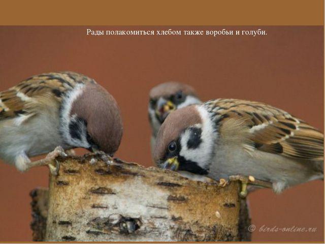 Рады полакомиться хлебом также воробьи и голуби.