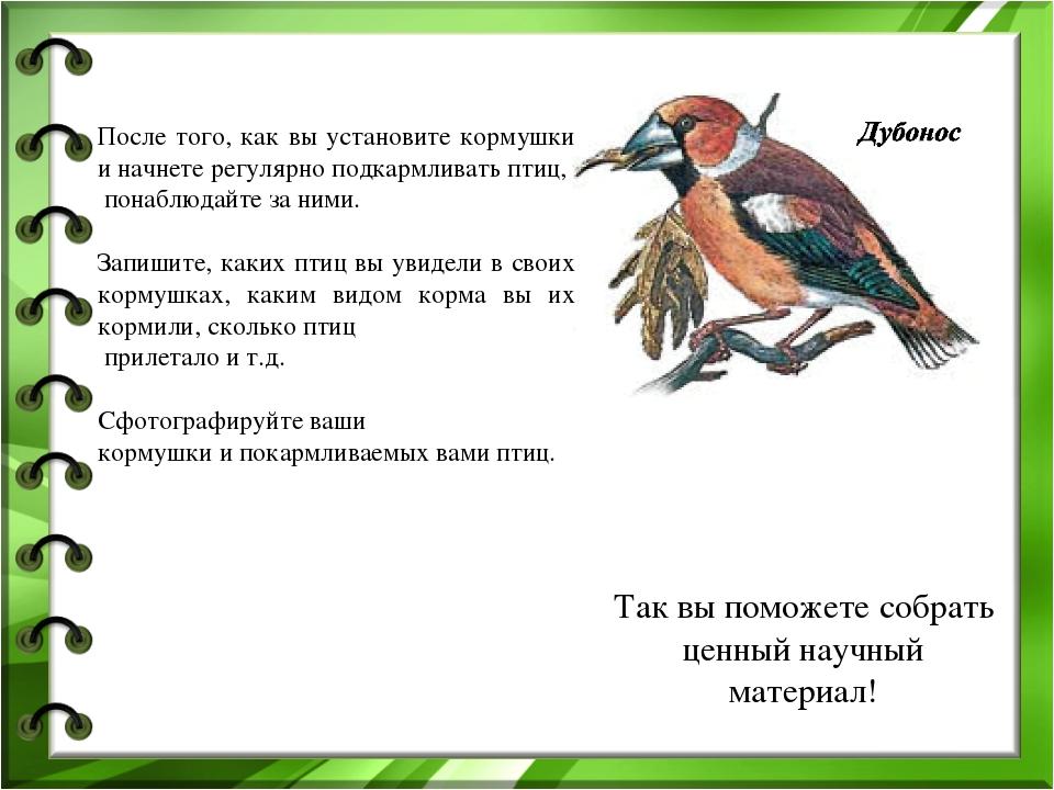 После того, как вы установите кормушки и начнете регулярно подкармливать птиц...