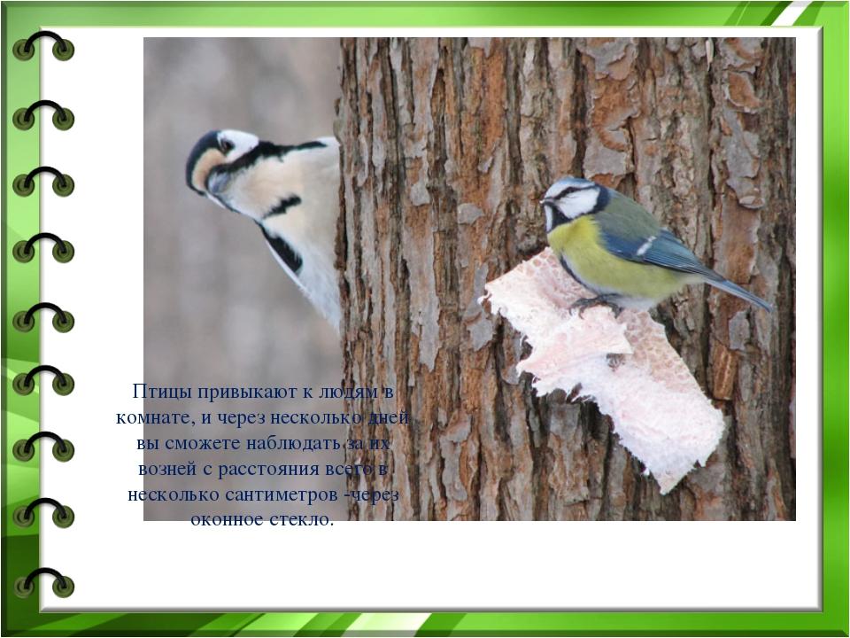 Птицы привыкают к людям в комнате, и через несколько дней вы сможете наблюдат...