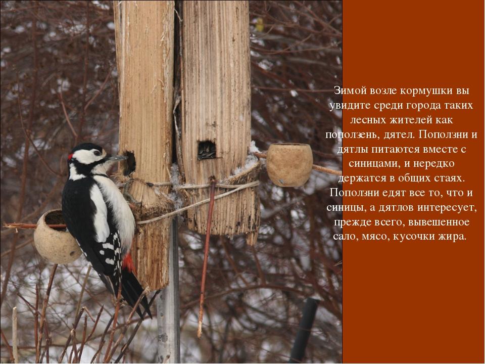 Зимой возле кормушки вы увидите среди города таких лесных жителей как поползе...