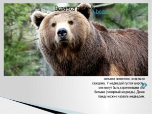 A bear is a true symbol of the wildlife. A bear is a very large and powerful