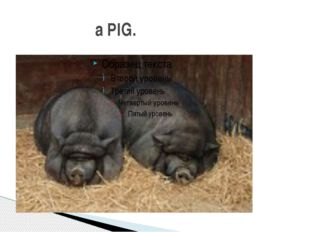 a PIG.