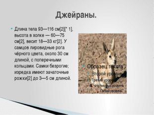 Длина тела 93—116 см[2][* 1], высота в холке — 60—75 см[2], весит 18—33 кг[2]