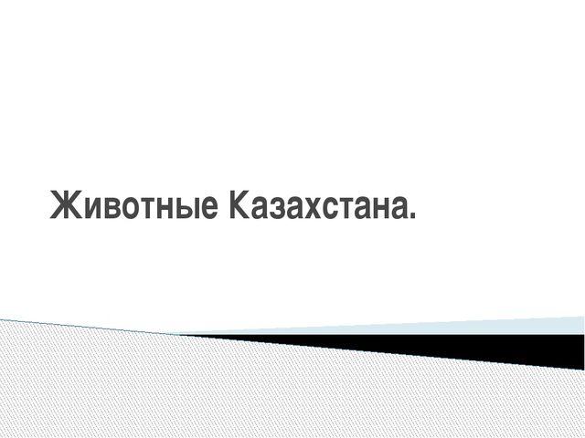 Животные Казахстана.