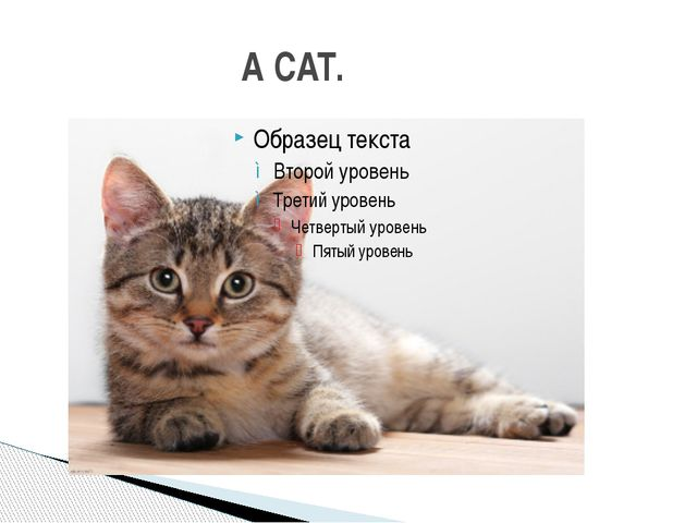 A CAT.