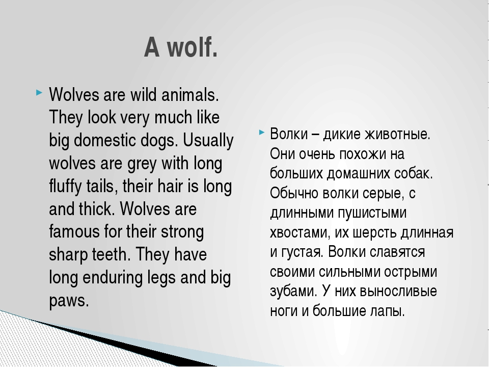 Wolves are wild animals. They look very much like big domestic dogs. Usually...