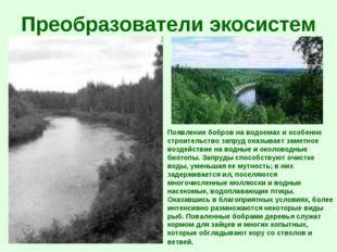 Преобразователи экосистем Появление бобров на водоемах и особенно строительст