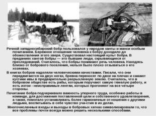 Речной западносибирский бобр пользовался у народов ханты и манси особым почит