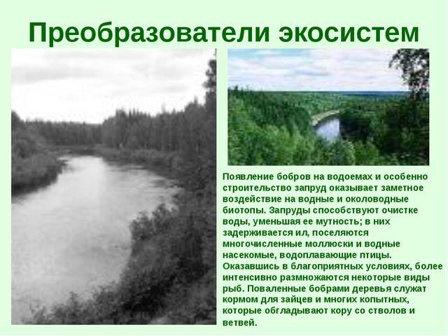 Преобразователи экосистем Появление бобров на водоемах и особенно строительст...