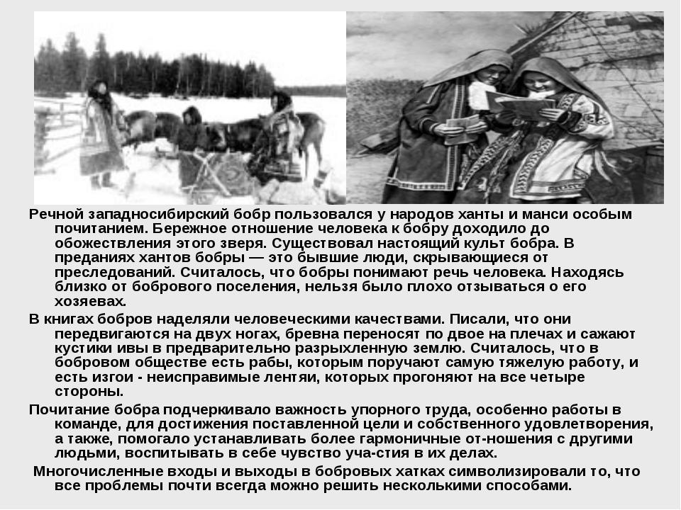 Речной западносибирский бобр пользовался у народов ханты и манси особым почит...