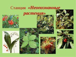 Станция «Неопознанные растения»
