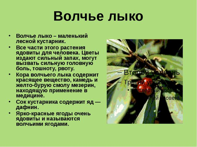 Памятка «Внимание: ядовитые растения.» Нельзя есть ягоды, которых ты не знаеш...