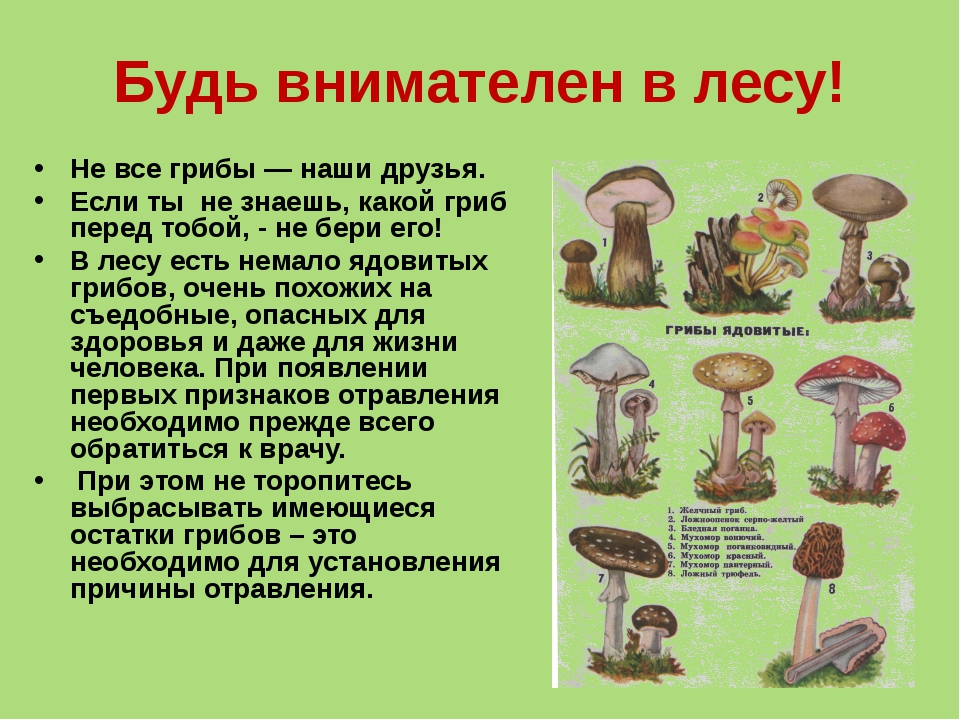 Будь внимателен в лесу! Не все грибы — наши друзья. Если ты не знаешь, какой...