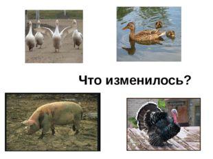 и Иртыш, Иркутск, Иваново (3) Иван, Игорь, ива, Иваново, иволга.(3) Индия, Ит