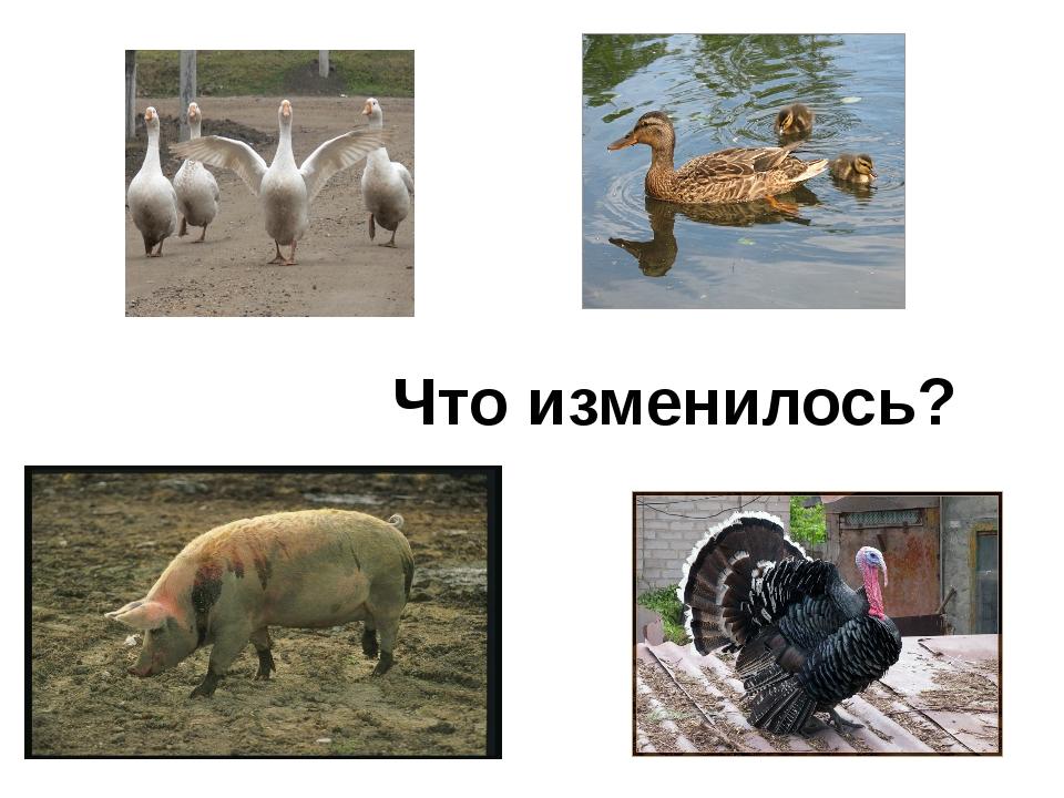 и Иртыш, Иркутск, Иваново (3) Иван, Игорь, ива, Иваново, иволга.(3) Индия, Ит...