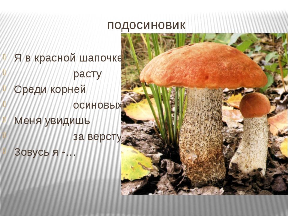 подосиновик Я в красной шапочке расту Среди корней осиновых. Меня увидишь за...