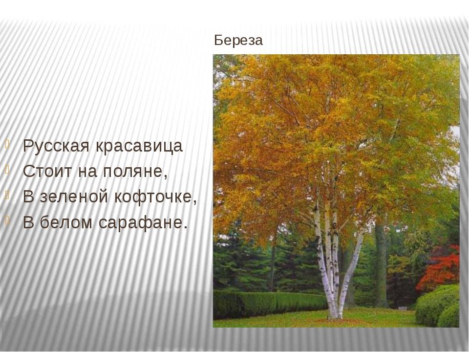 Береза Русская красавица Стоит на поляне, В зеленой кофточке, В белом сарафане.