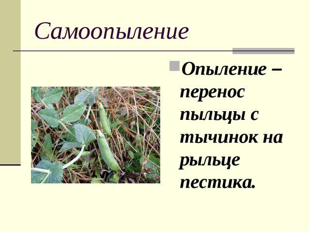 Самоопыление Опыление – перенос пыльцы с тычинок на рыльце пестика.