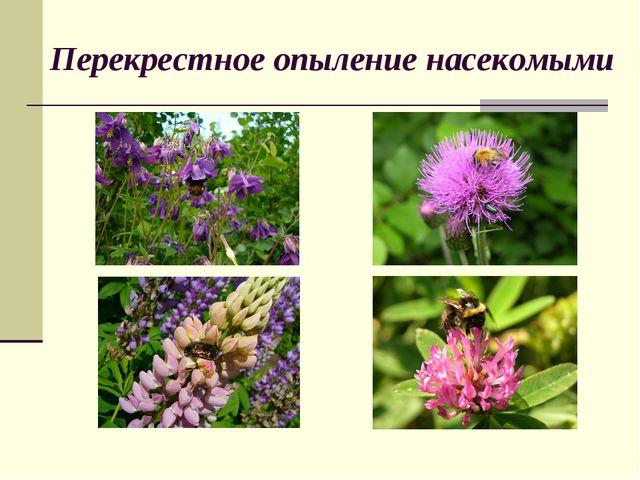 Перекрестное опыление насекомыми