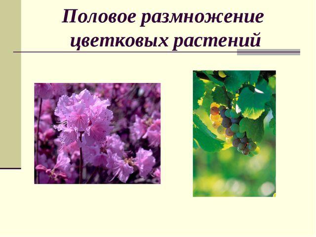 Половое размножение цветковых растений