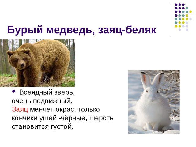 Бурый медведь, заяц-беляк Всеядный зверь, очень подвижный. Заяц меняет окрас,...