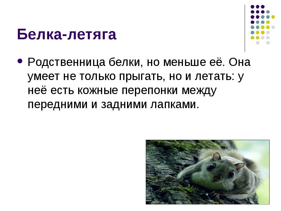 Белка-летяга Родственница белки, но меньше её. Она умеет не только прыгать, н...