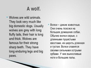 Wolves are wild animals. They look very much like big domestic dogs. Usually