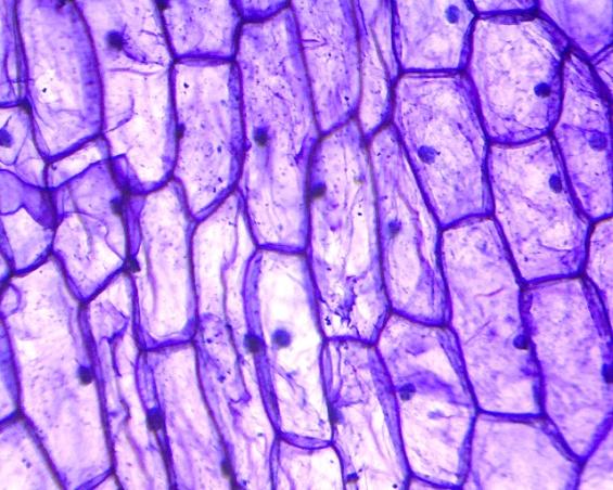 G:\микроскоп\Image-2_2013-11-24.jpg
