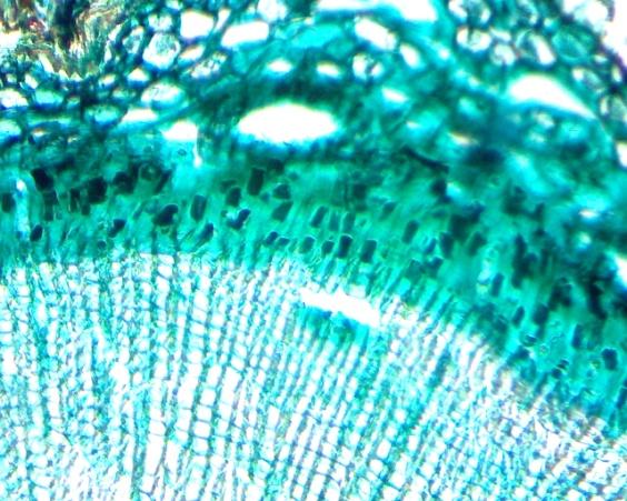 G:\микроскоп\Image-4_2013-11-24.jpg