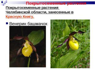 Покрытосеменные растения Челябинской области, занесенные в Красную Книгу. Вен