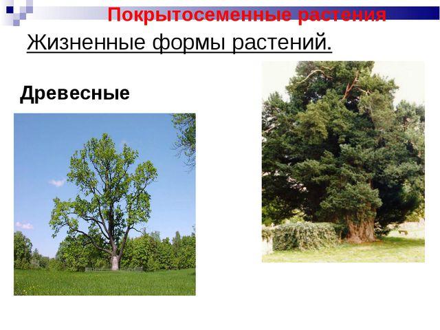 Жизненные формы растений. Древесные Покрытосеменные растения