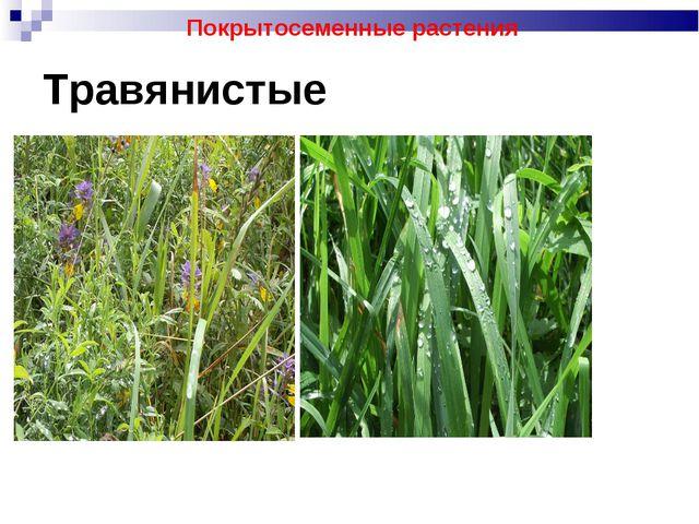 Травянистые Покрытосеменные растения
