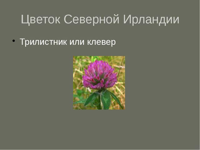 Цветок Северной Ирландии Трилистник или клевер