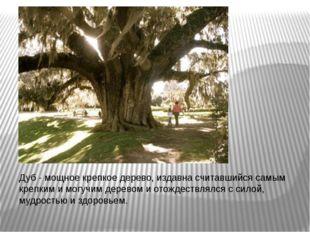 Дуб - мощное крепкое дерево, издавна считавшийся самым крепким и могучим дер