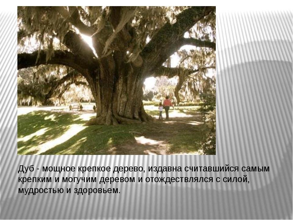 Дуб - мощное крепкое дерево, издавна считавшийся самым крепким и могучим дер...
