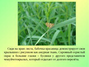 Сидя на краю листа, бабочка-красавица демонстрирует свои крылышки с рисунком