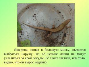 Ящерица, попав в большую миску, пытается выбраться наружу, но её цепкие лапк